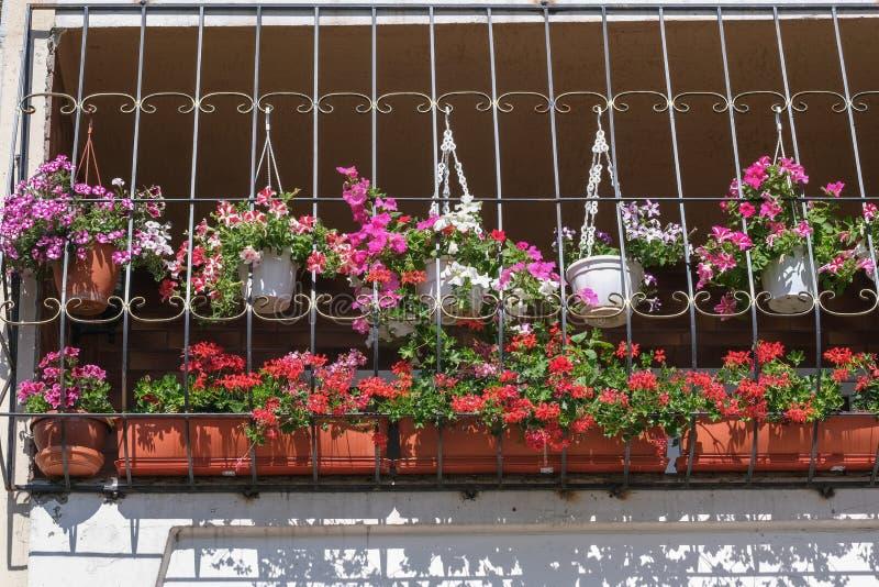 Eingemachte Blumen des Sommers auf dem Balkon lizenzfreie stockfotografie