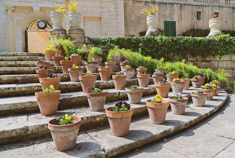 Eingemachte Blumen im Präsidentengarten Sr Anton in Attard Malta stockfotos