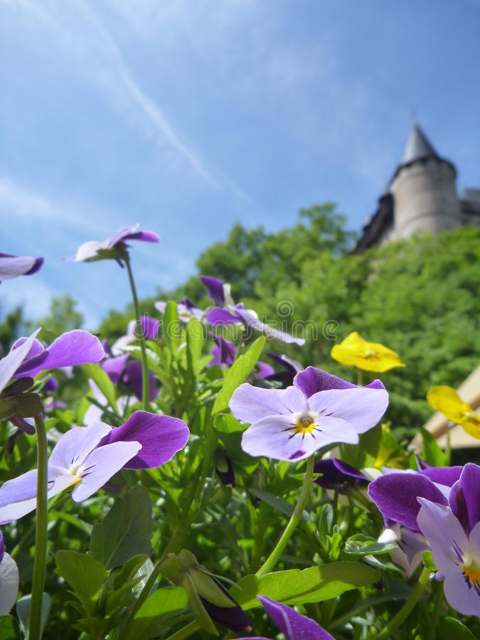 Eingemachte bunte Blumen mit Schloss Karlstejn ragen in Hintergrund hoch stockbild