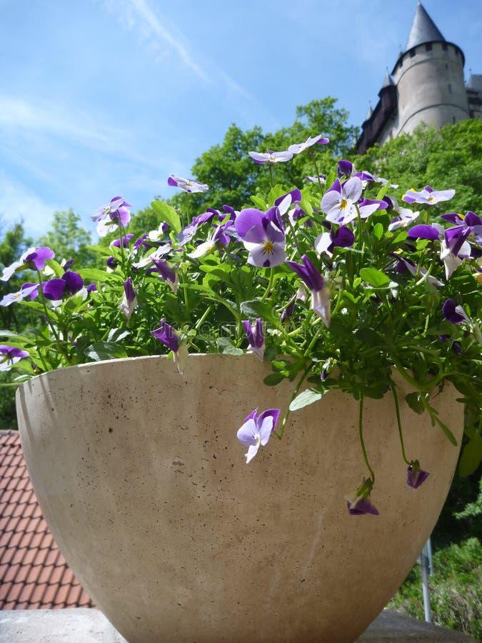 Eingemachte bunte Blumen mit Schloss Karlstejn ragen in Hintergrund hoch stockbilder