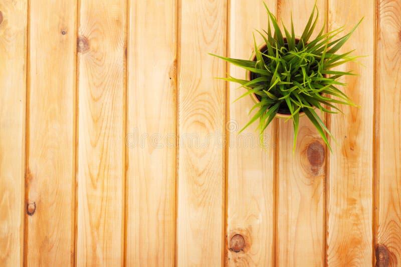 Eingemachte Grasblume über Holztischhintergrund lizenzfreie stockbilder