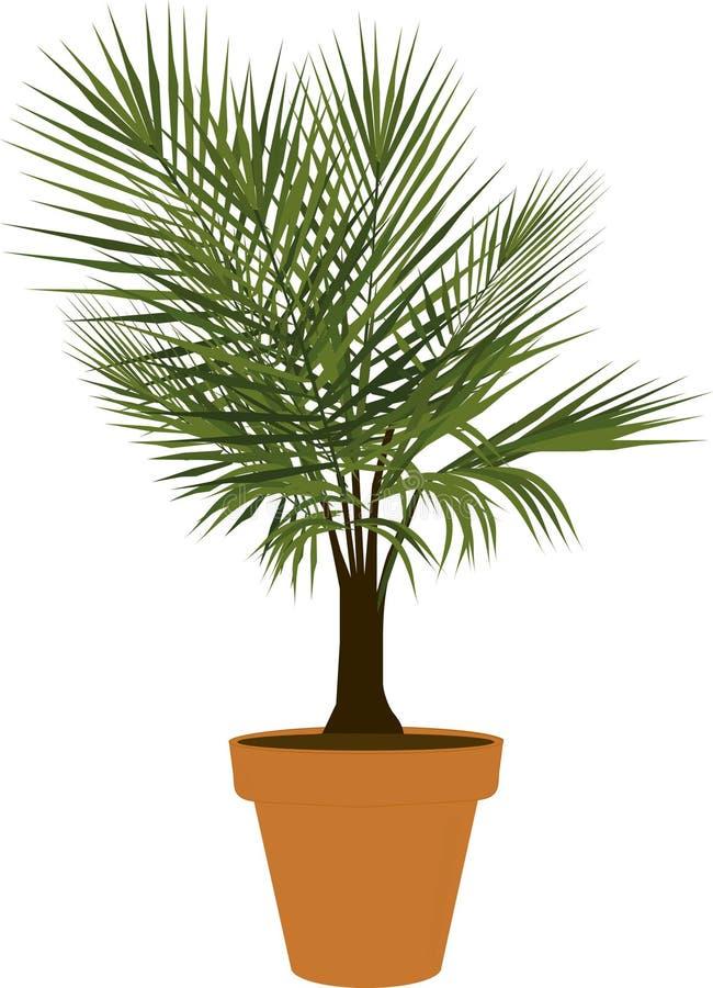 Eingemachte Majestäts-Palme vektor abbildung