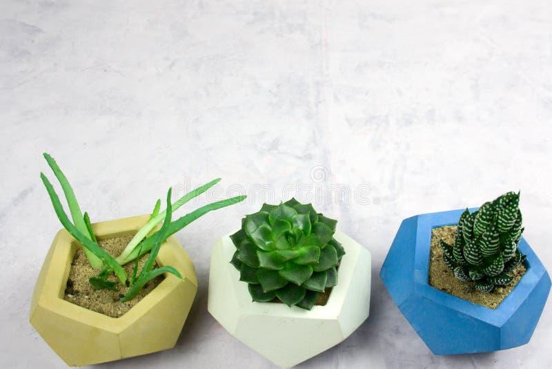 eingemachte Succulents auf weißem snone Hintergrund-Kopienraum stockbild