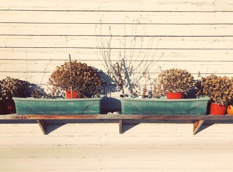 Eingemachte Trockenblume im Regal lizenzfreies stockfoto