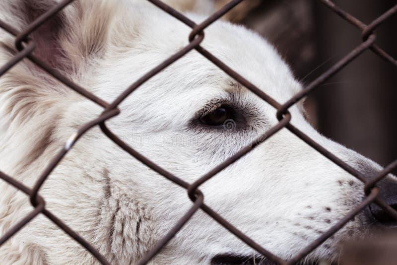 Eingesperrter Hund, mit traurigem Gesicht Hund in den Schutzaugen eines verlassenen Tieres stockfoto