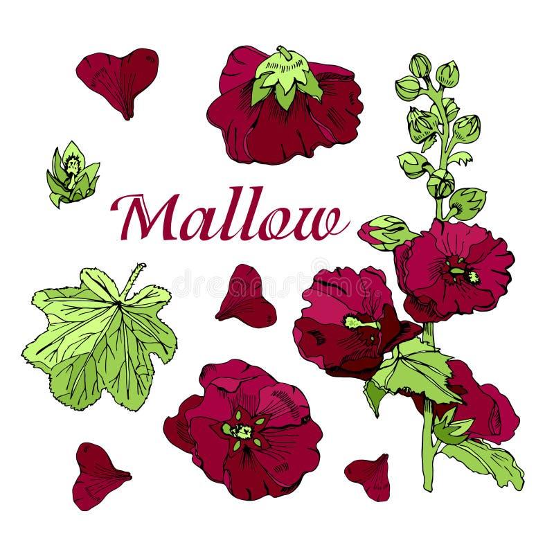 Eingestellt mit Blumenstrauß und einzelnen Blumen der kastanienbraunen Malve und der grünen Blätter Handgezogene Tinte und farbig lizenzfreie abbildung