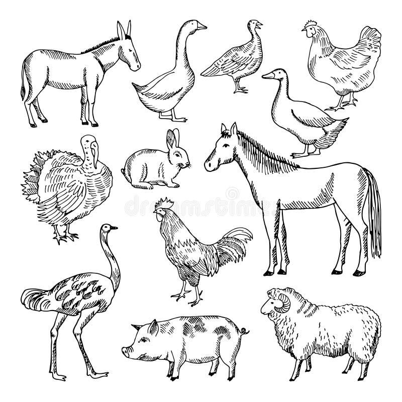 Eingestellte in der Hand gezeichnete Art der Vieh Photorealistic Ausschnittskizze stock abbildung