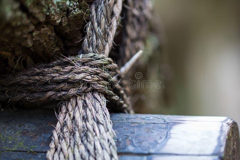 Eingewickeltes Seil auf dem alten Holz im Wald stockbilder