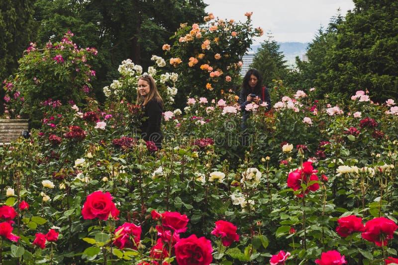 Einheimische, die Rosen bei internationaler Rose Test Garden ansehen lizenzfreie stockbilder