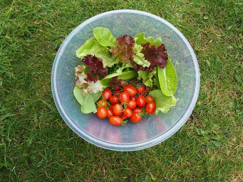 Einheimische Salatblätter und -tomaten in einer Schüssel lizenzfreie stockfotografie