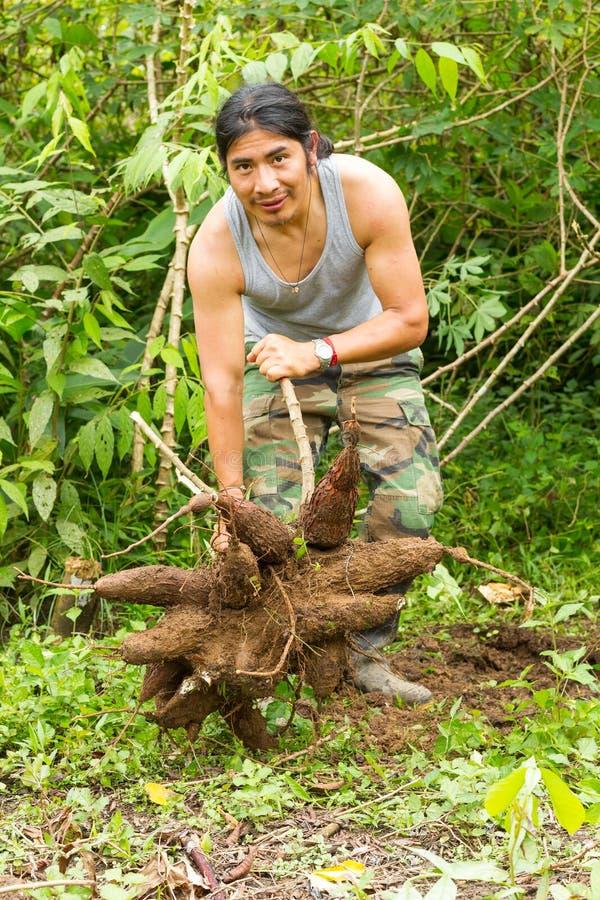 Einheimischer Mann mit Tapioka-Wurzeln stockbild