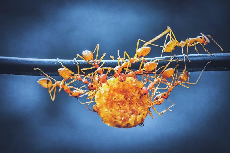 Einheit von Ameisen stockfotos