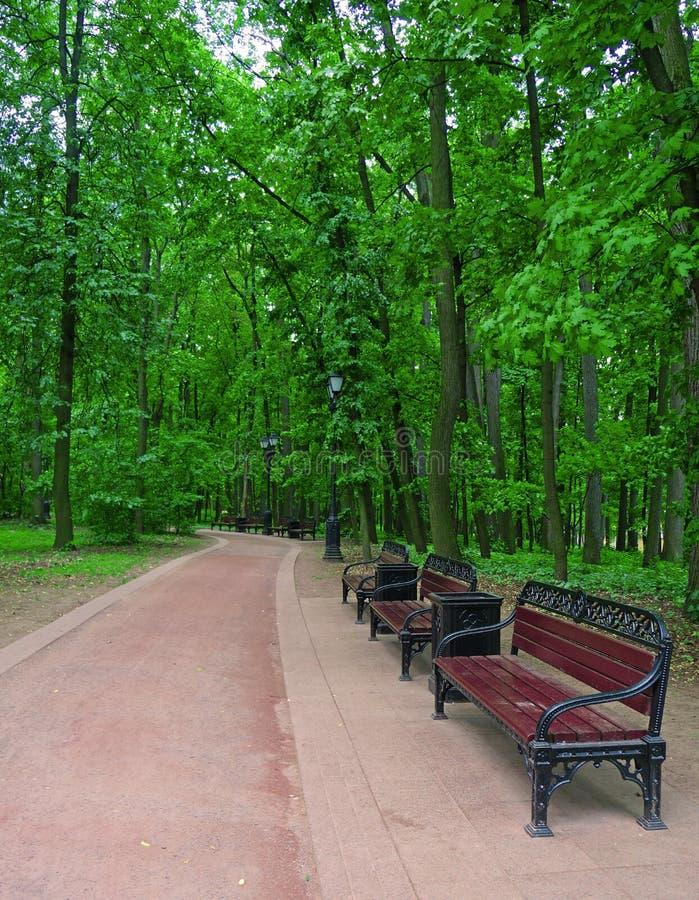 Einige Bänke entlang einem Gehweg in einem Sommer parken lizenzfreies stockbild