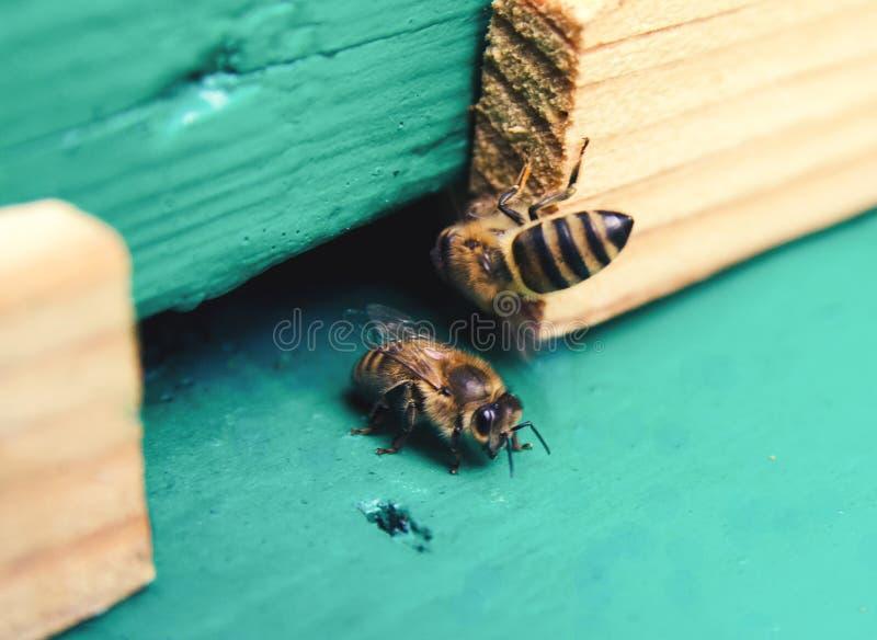 Einige Bienen lizenzfreie stockfotos