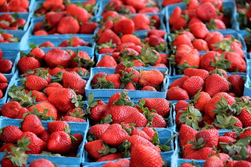 Einige blaue Behälter füllten mit den frischen ausgewählten Erdbeeren, angezeigt am lokalen Landwirtmarkt lizenzfreies stockbild