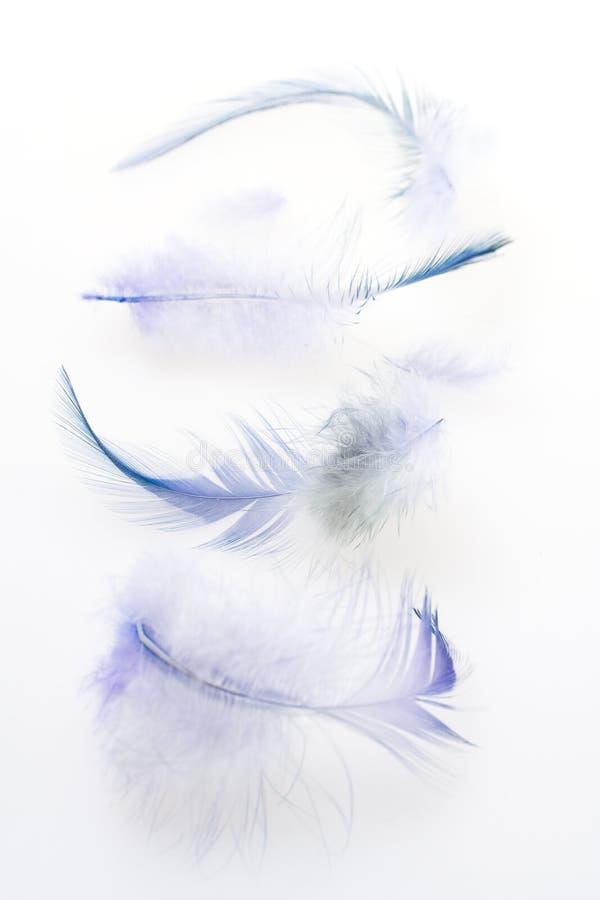 Einige dunkelblaue Federn stockfotos