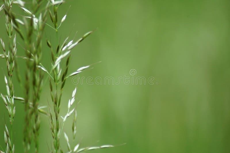 Einige Grasblätter lizenzfreie stockfotos