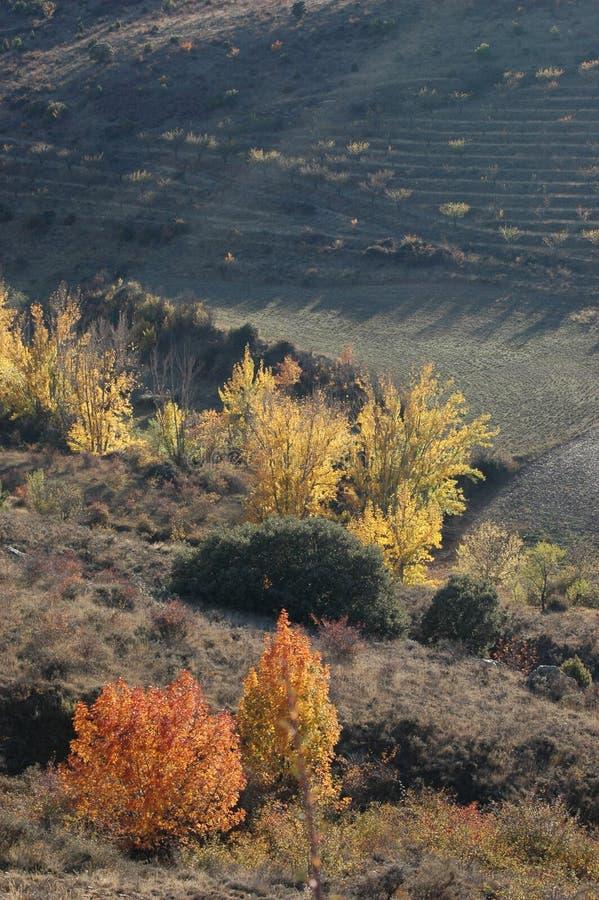 Einige herbstliche Bäume im Rock des Hügels stockfotos