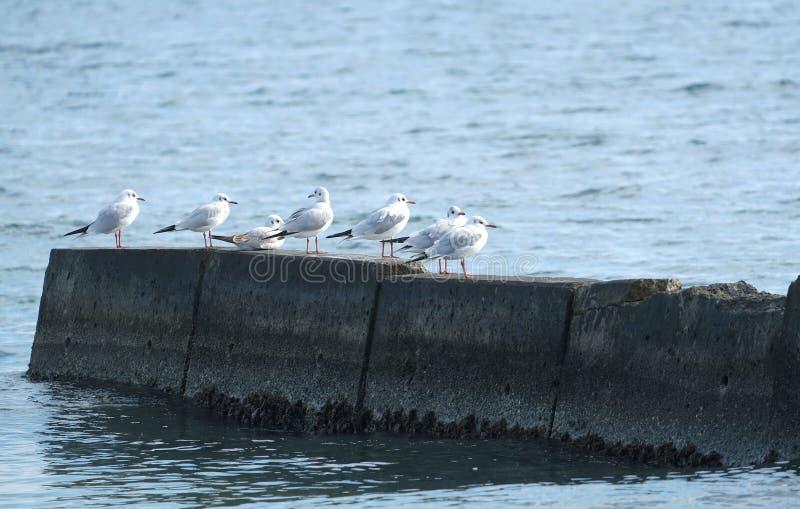 Einige Möven sitzen auf einem Steinpier auf dem Mittelmeer stockfotos