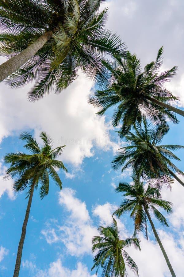 Einige Palmen gegen blauen bewölkten Himmel lizenzfreie stockfotografie