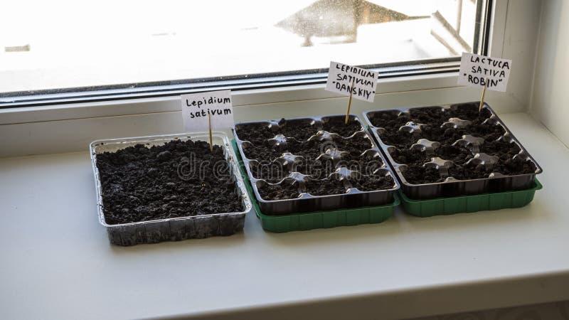 Einige Plastikbehälter mit Gartenboden Gepflanztes Sämlingbild stockfotos
