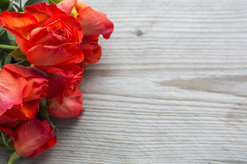 Einige rote Köpfe der frischen Rosen lizenzfreie stockbilder