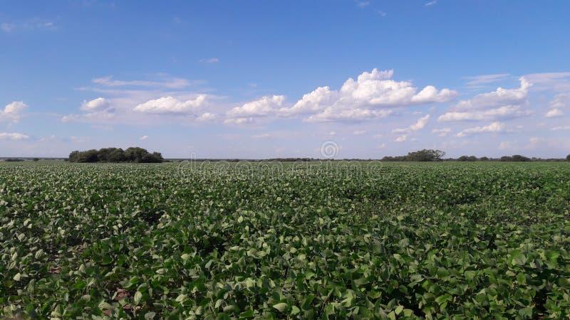Einige Wolken in Sunny Day lizenzfreies stockfoto