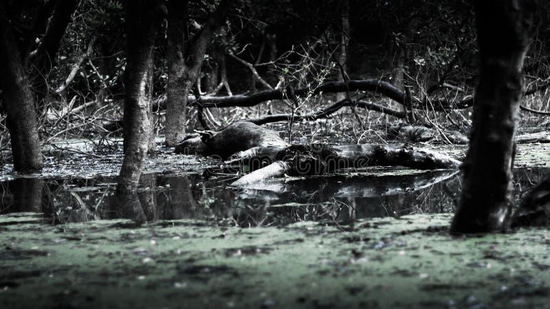 Einiger Baum und Anlagen stehen auf dem See haben irgendeinen defekten Baum lizenzfreies stockfoto