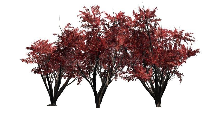 Einiges verschiedener Krepp Myrte im Herbst stock abbildung