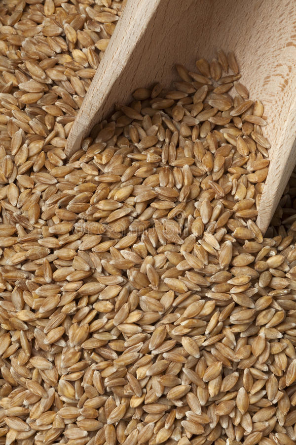 Free Einkorn Wheat Seeds Royalty Free Stock Images - 97451489