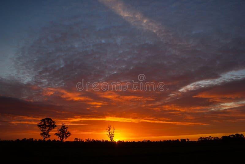 einmal in einem Lebenszeitsonnenuntergang in Australien mit sillhouettes von Bäumen, Cobram, Victoria, Australien lizenzfreies stockfoto