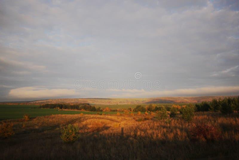 Einsam eine Kiefer auf einem Gebiet und ein gelbes Gras stockfoto