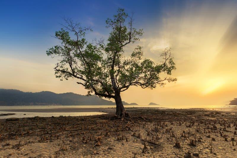 Einsam von einem Baum auf tropischem Strand während des Sonnenuntergangs - Langes exposur stockfotografie