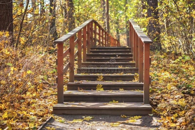 Einsame alte Holzbank im leeren Herbstpark unter Blättern, Fallwaldjahreszeiten, nostalgisches Stimmungskonzept stockfotografie