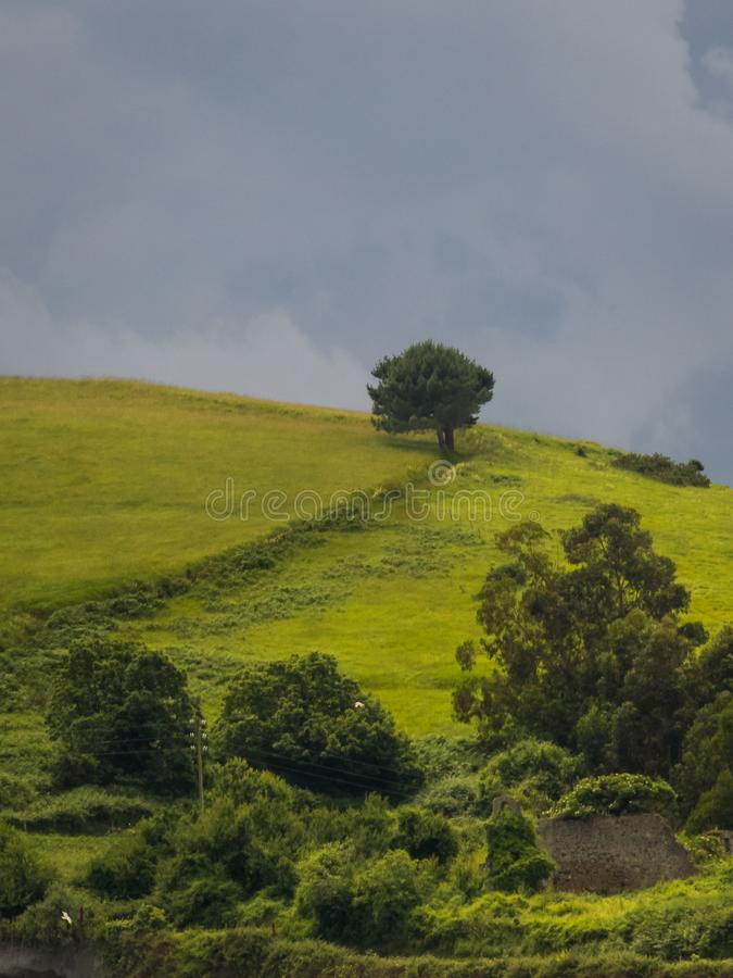 Einsame Bäume auf einem Hügel an einem bewölkten Tag stockbild