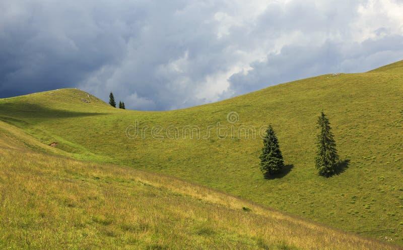Einsame Bäume auf Hügel stockfotos