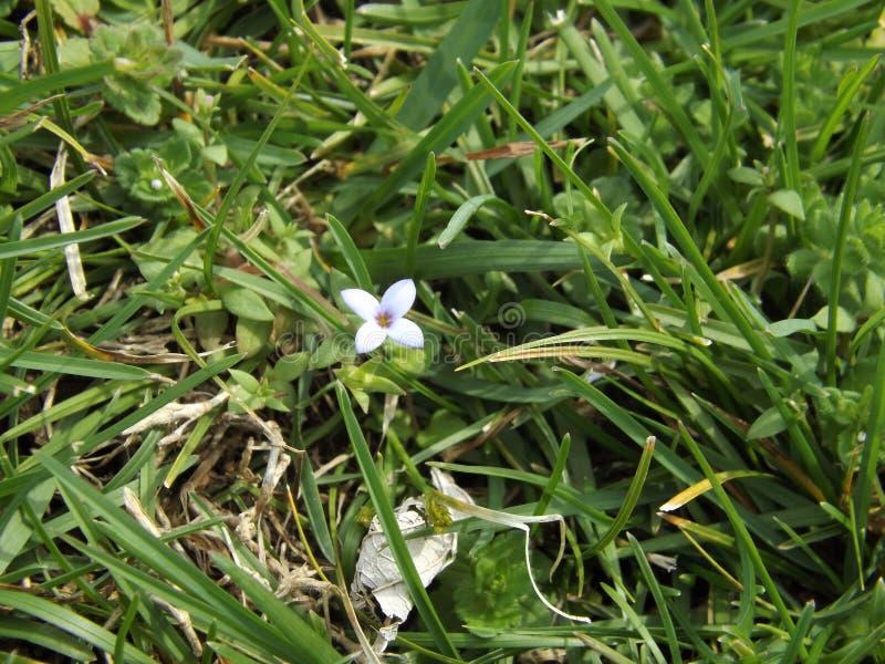 Einsame Blüte stockbild