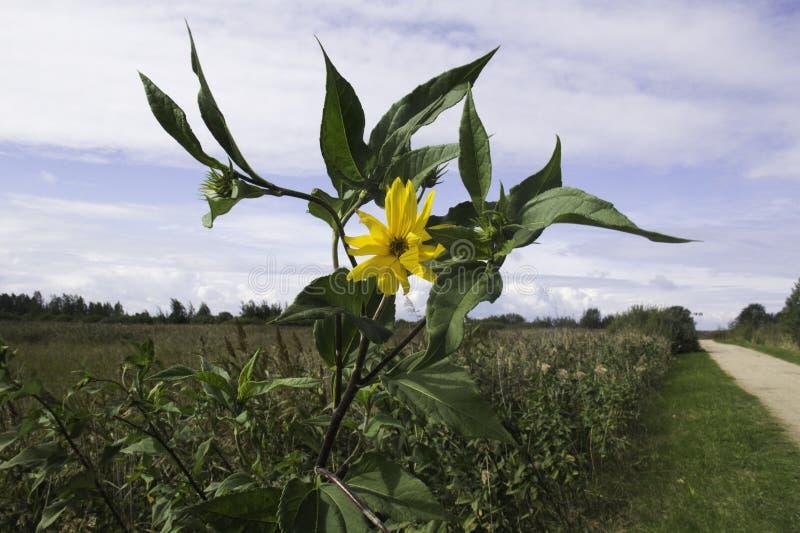 Einsame Blume auf dem Gebiet lizenzfreie stockfotos