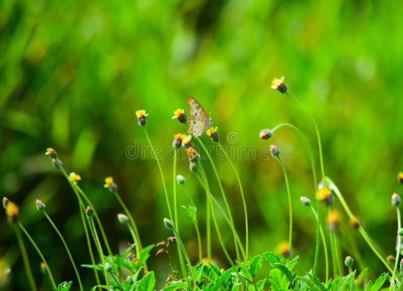 Einsame Butterfliege stockfotos