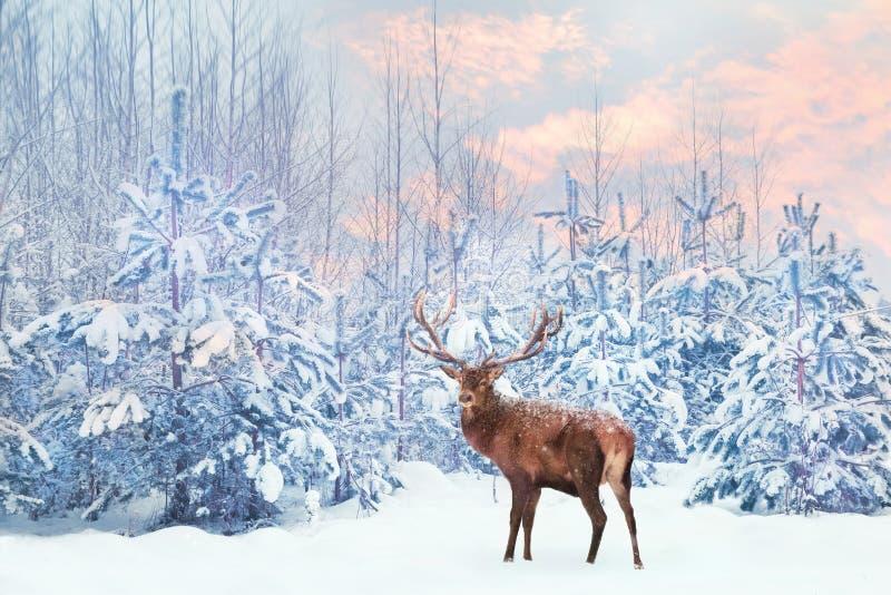 Einsame edle Rotwildpost mit großen Hörnern gegen feenhaften Wald des Winters bei Sonnenuntergang stockfotografie