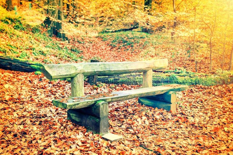 Einsame Holzbank im Herbstwald lizenzfreie stockfotografie