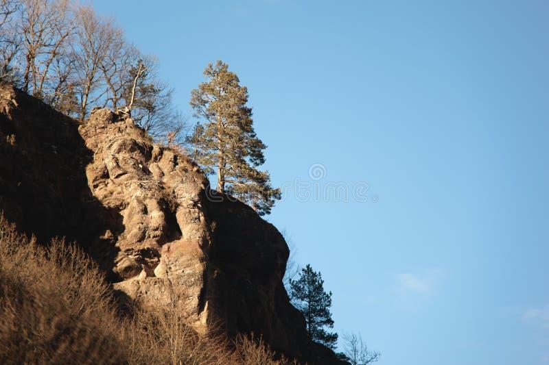 Einsame immergrüne Kiefer steht am Rand einer Klippe auf einem Berghang gegen einen blauen Himmel im Herbst stockfoto