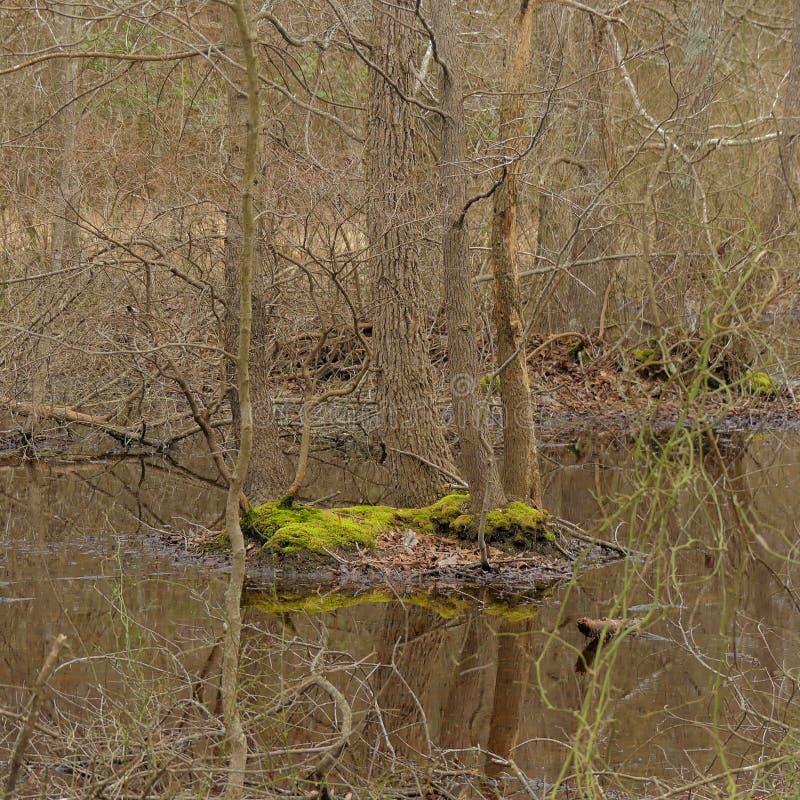 Einsame Insel von Bäumen im Sumpf stockfoto