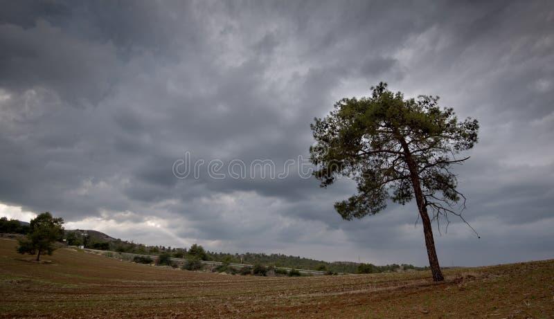 Einsame Kiefer und bewölkter stürmischer Himmel lizenzfreie stockfotografie