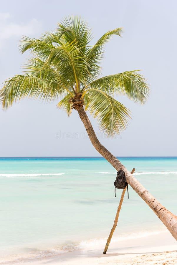 Einsame Palme auf der Strandinsel Saona, La Altagracia, Dominikanische Republik Kopieren Sie Raum für Text vertikal stockfotos