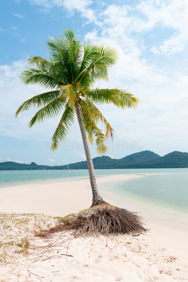 Einsame Palme auf einem tropischen idylic Sandstrand lizenzfreies stockbild