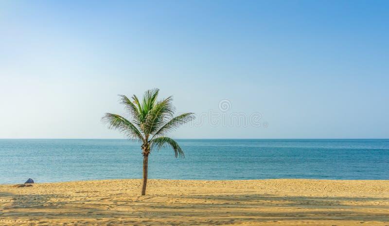 Einsame Palme auf tropischem Ufer lizenzfreies stockfoto