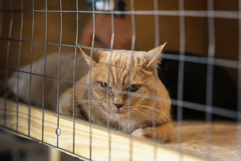 Einsame rote Katze mit einem traurigen Blick, liegend auf Käfig im Schutz und Warteinhaber mit Haus Konzept von Menschlichkeit, G lizenzfreies stockbild