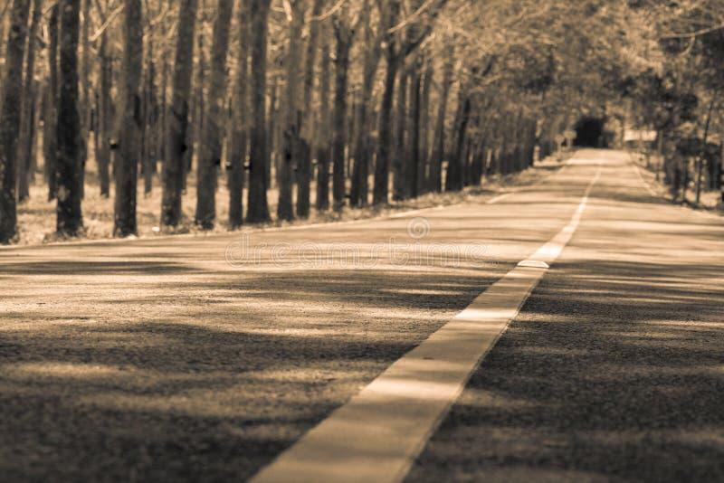 Einsame Straße des Sepiatones, Mittellinie und viel versprechende Zukunft Träumerisches L stockbild