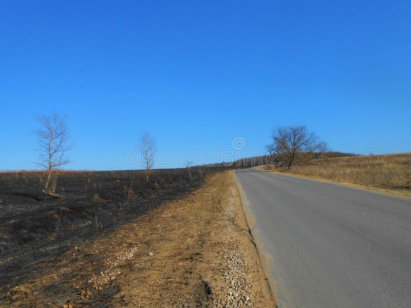 Einsame Straße mit den gleichen Bäumen lizenzfreies stockbild